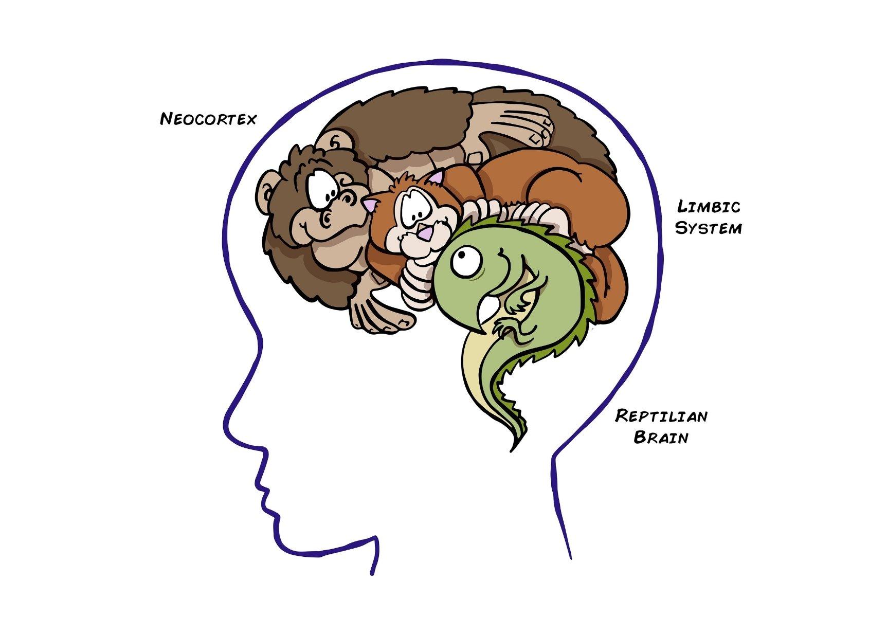 """Il nostro cervello: come funziona e perché ci sono tre diverse """"creature"""" dentro di noi"""